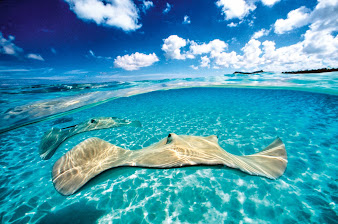 #4 Grand Cayman Wallpaper