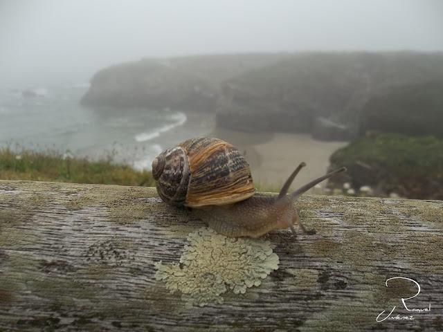 Caracol en la playa de Ribadeo