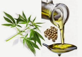 Researchers Find Hemp Seed Oil A Valuable Source of Bioactive Compounds For The Food and Cosmetic Industry Hempseedoil428-3