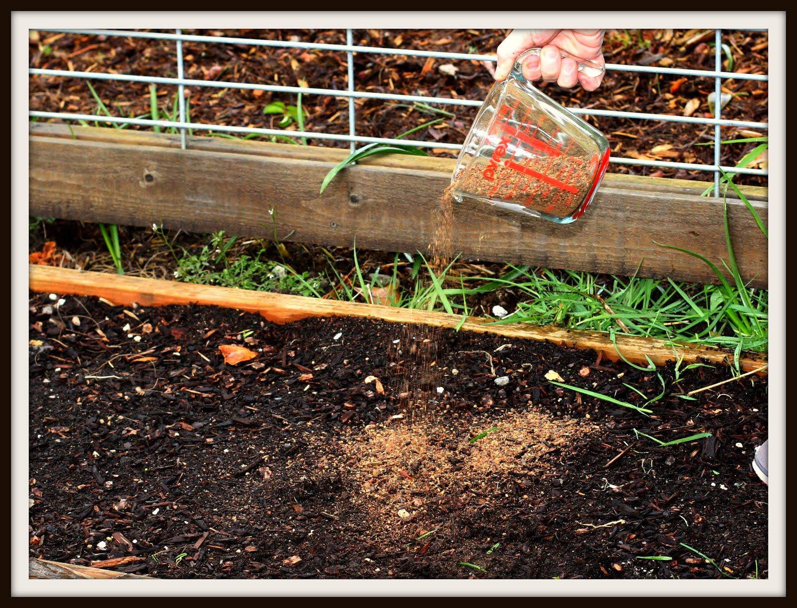 Desperate Gardener Preparing Your Soil