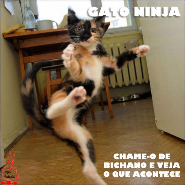 meme Gato Ninja