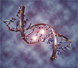 Centenas de genes influenciam altura de cada pessoa