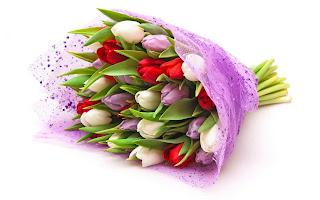 Tulipanes blancos, morados y rojos