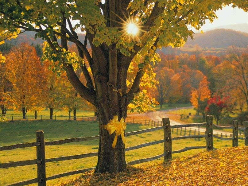 yellow-ribbon-in-autumn-pic