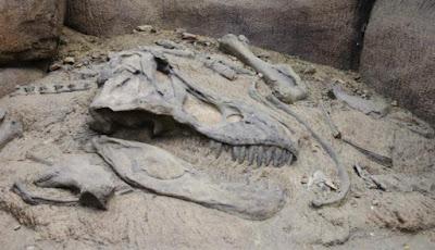 Bocah Ini Temukan Fosil Dinosaurus Usia 100 Juta Tahun! Kok Bisa?