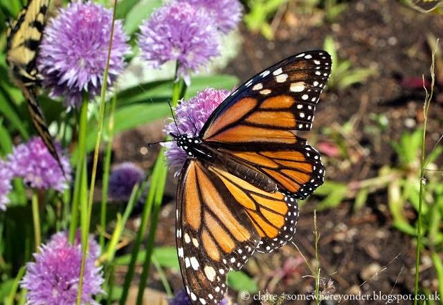 Butterfly in Georgian Bay, Canada