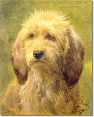 Dachshund Wire Haired Dog Breed Pictures