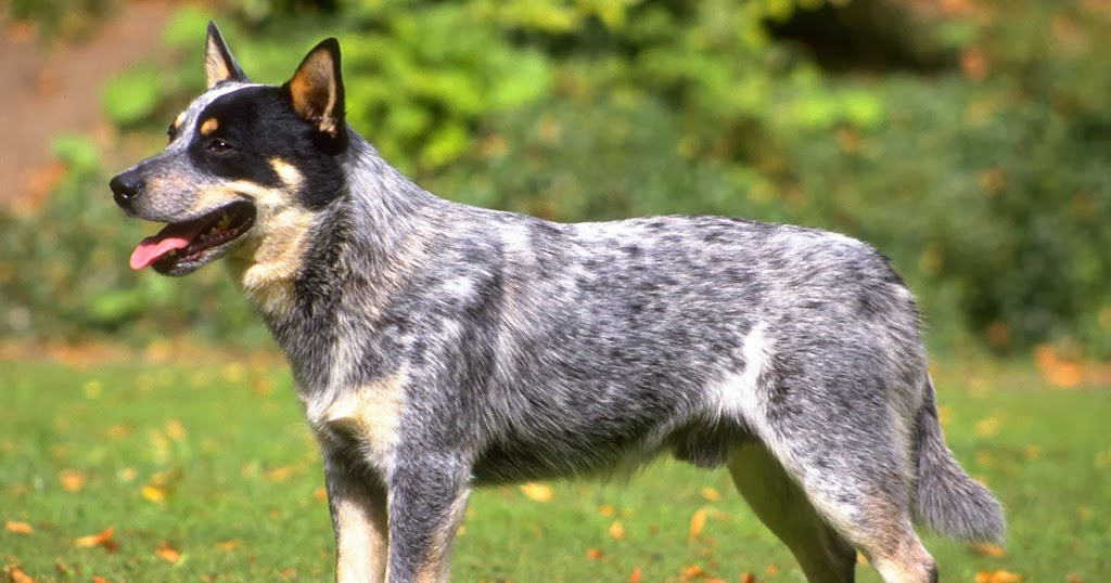 Top Ten Ugliest Dog Breeds