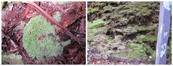Bako National Park - Moss - WireBliss