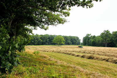 Haying a field in Maine