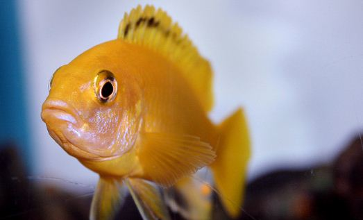 Nightclub Music Branded 'Too Loud' For Pet Fish