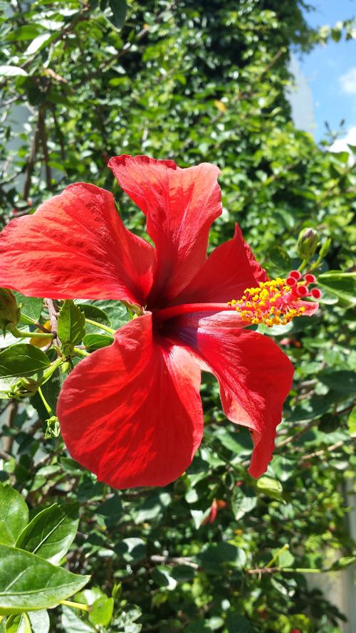 Hibiskus Frühling Sommer Urlaub Türkei Atelierladen Blog