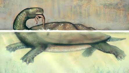 Kura-kura Pemangsa Buaya