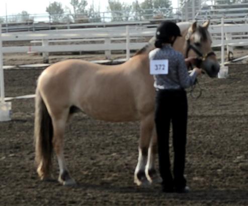 4H horse showmanship