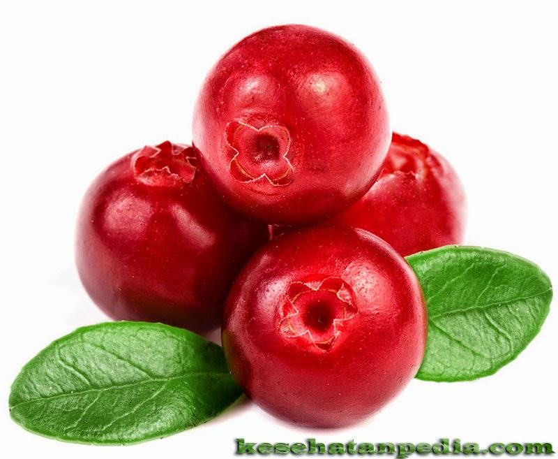 Manfaat Buah Cranberry