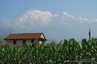 Campos de maíz en Dithal - Autor ©Davide Vadalà - (www.nomadtravellers.com)