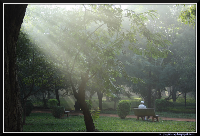Misty morning, Cubbon Park