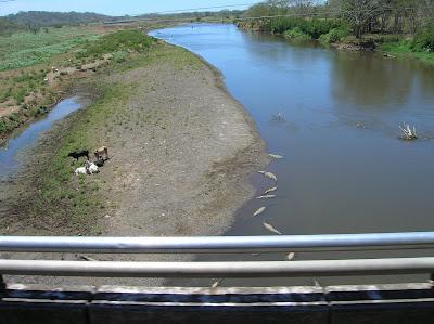 Cocodrilos, río Tártoles, Costa Rica, vuelta al mundo, round the world, La vuelta al mundo de Asun y Ricardo, mundoporlibre.com