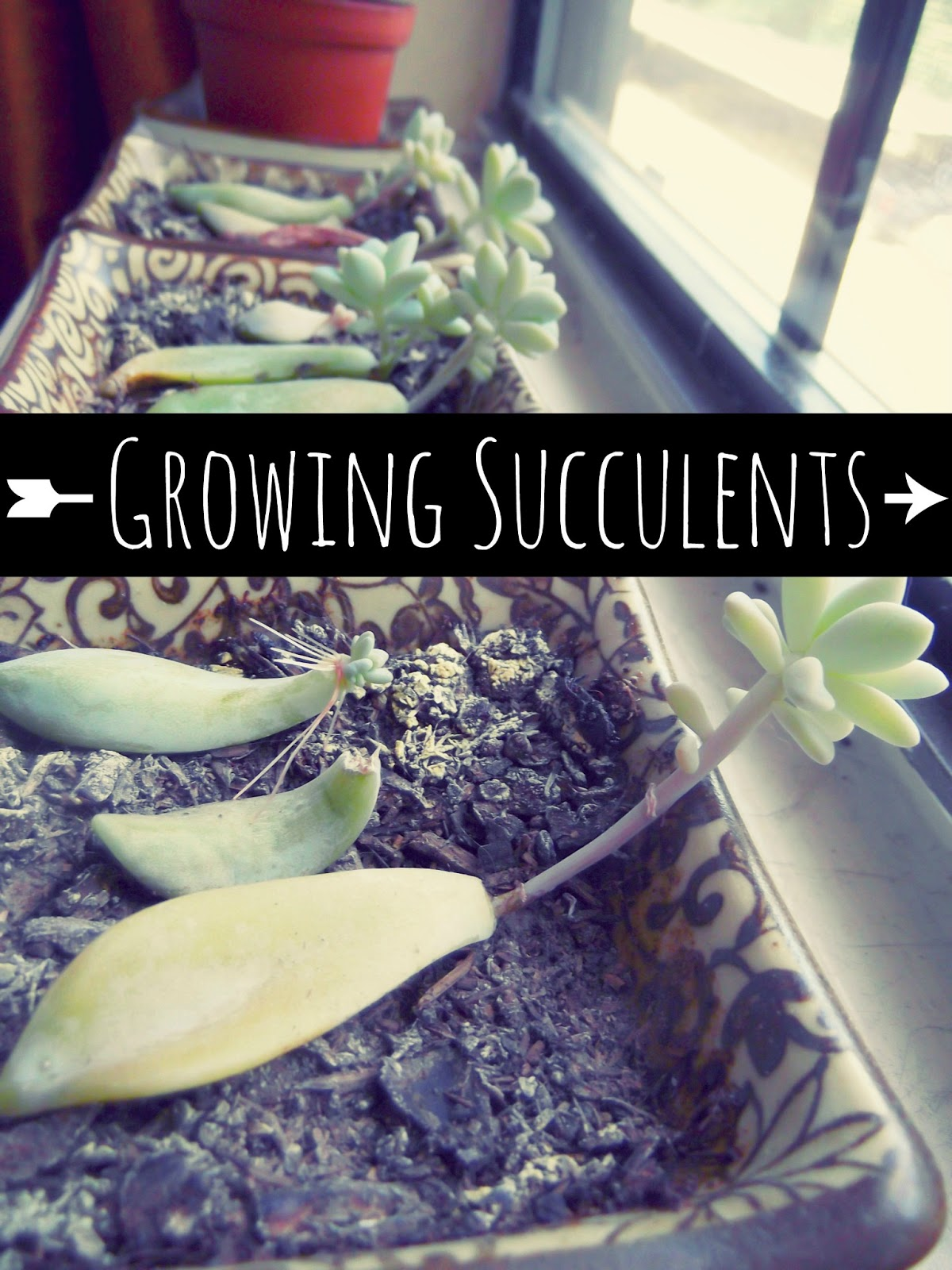 Life With Sarahb How To Grow Succulents
