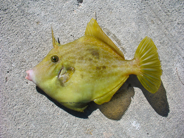 Filefish and More in Florida