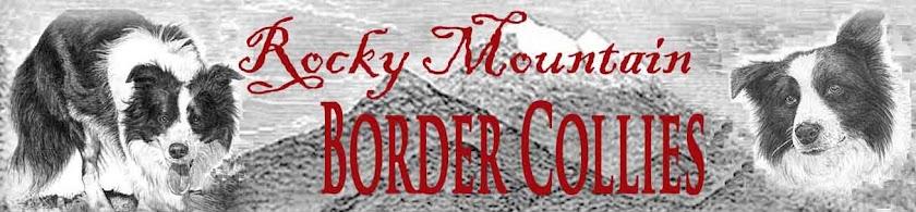 Rocky Mountain Border Collies