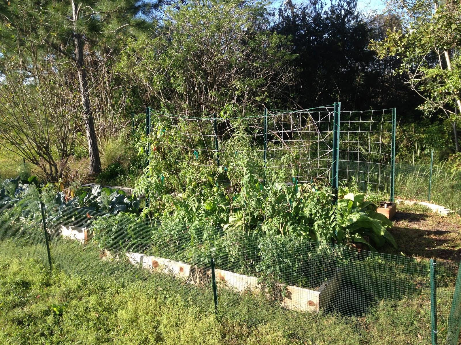 gardening in winter garden