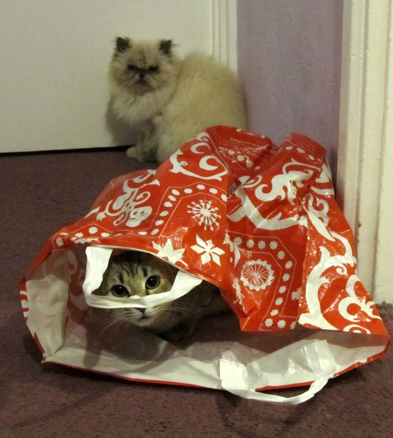 Don't let the cat out of the bag.
