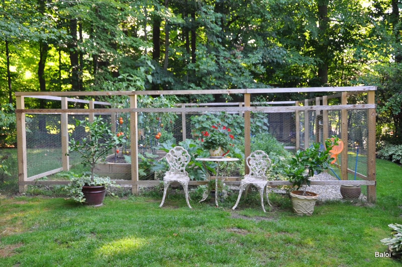 Gardeners With Kids The Vegetable Garden Fence
