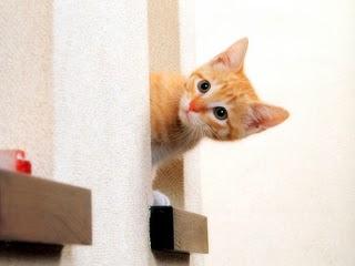 Kucing, Kucing Comel, Cat, Cute Cat, Kucing Menyorok