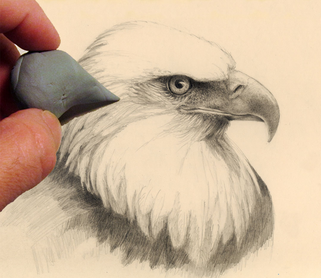 How to draw an eagle head | Mark Bornowski