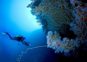 Taveuni's Signature Dive