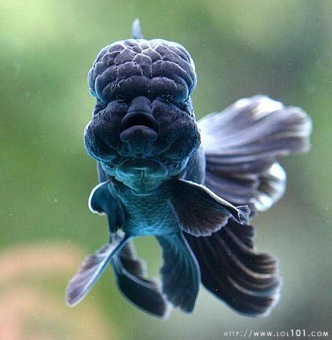 fish brain - photo #19