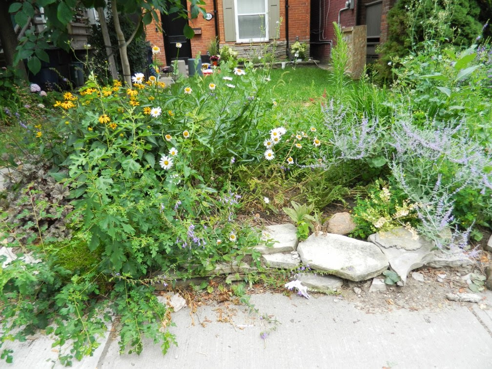Toronto Riverdale garden cleanup Paul Jung Gardening Services before