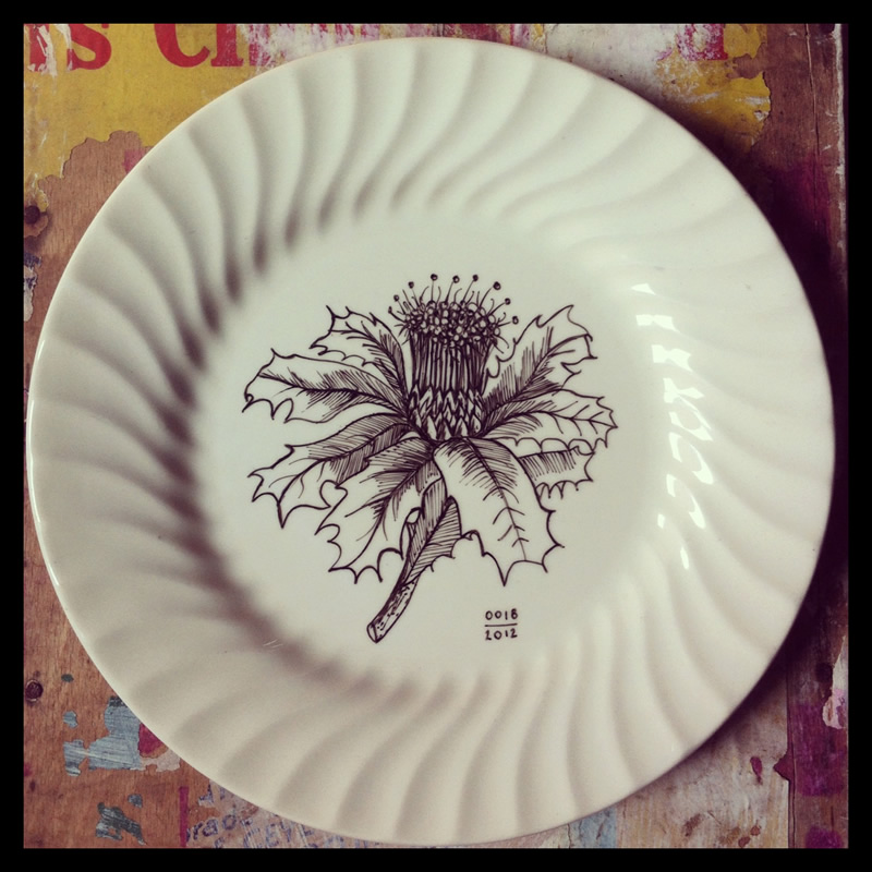 bush flowers plate hand painted blandifordia grandiflora. Inspired by the structured and intricate beauty of bush flowers & Bush Plates :: hand painted antique plates inspired by bush flowers ...