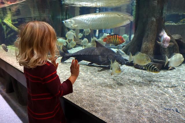 Stella Looking at Fish