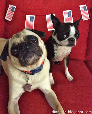 Pug and Boston terrier with flags