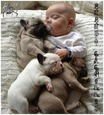 bebe, perro, perritos, cachorros, ternura, dormido