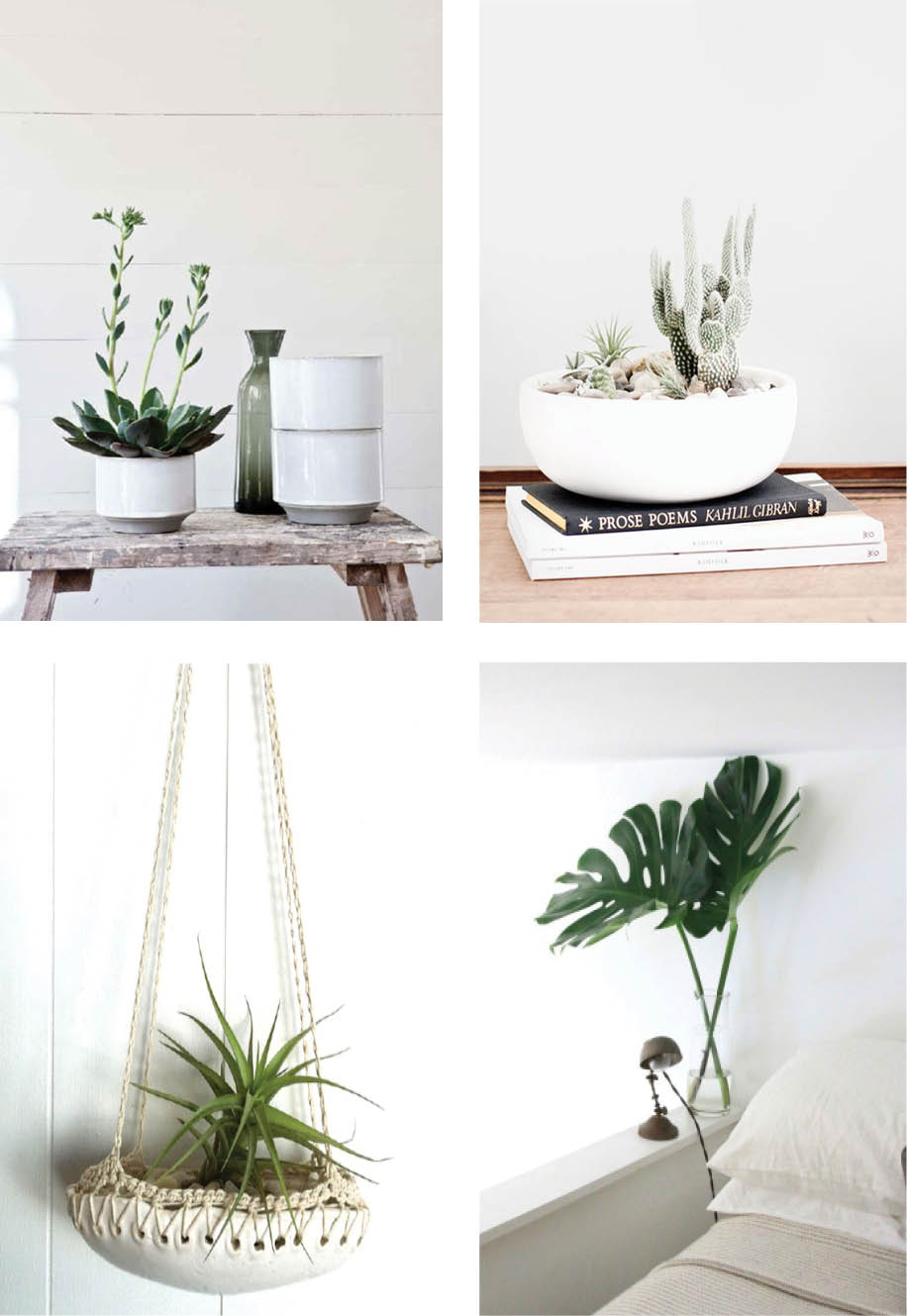 coastal style decorating with indoor plants