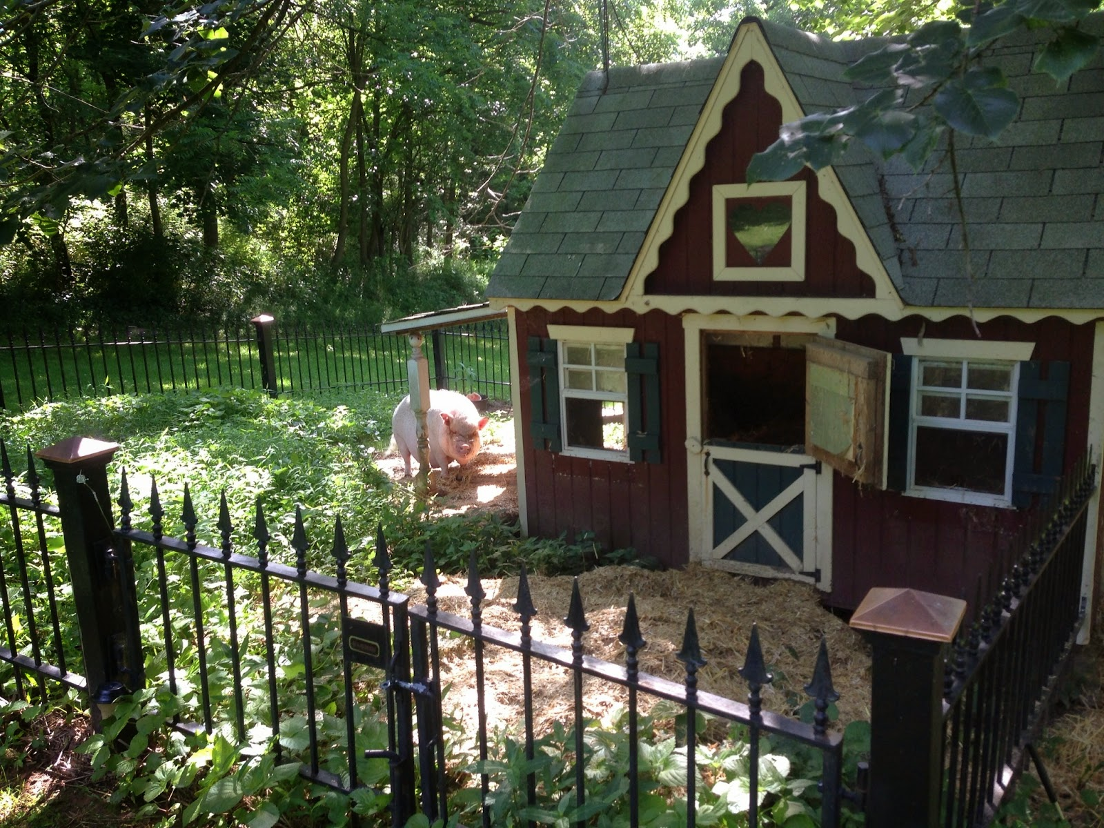 Diary Of A Real Life Veterinarian House Cleaning Pig Pen