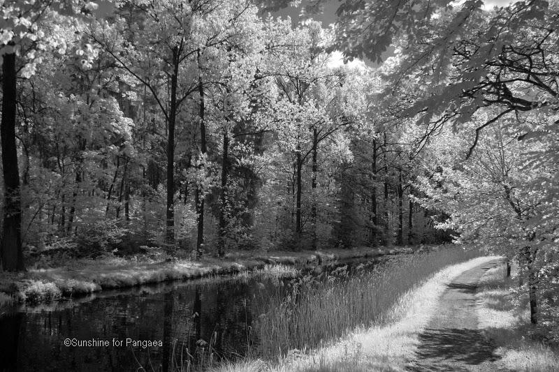 Infrarot Fotos Alter Kanal bei Nürnberg