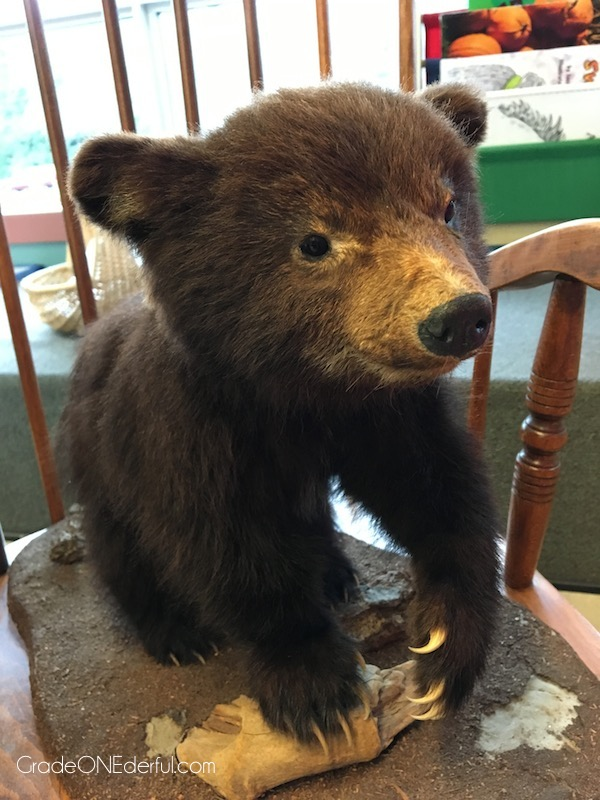 Stuffed baby bear cub. Bear studies in a grade 1 class.