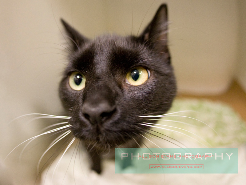 Cats For Adoption Danvers Ma