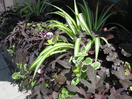 Kukka-asetelma erilaisilla lehtien muodoilla ja väreillä