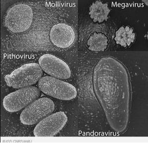 Virus Raksasa Prasejarah ditemukan di Permafrost Siberia
