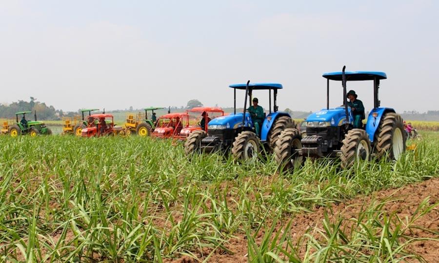 Gia Lai: Nhân rộng mô hình cánh đồng mía mẫu lớn