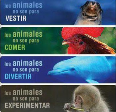 Ellos no son esclavos! / They are not slaves!