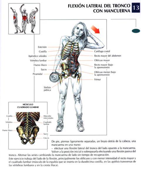Fitness trainner chiclayo - Barras de ejercicio para casa ...