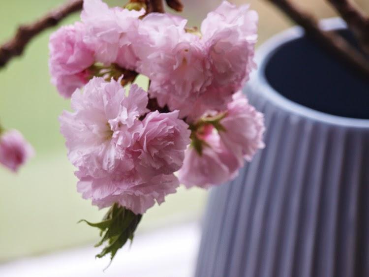 Overdådige lyserøde blomster i vaser
