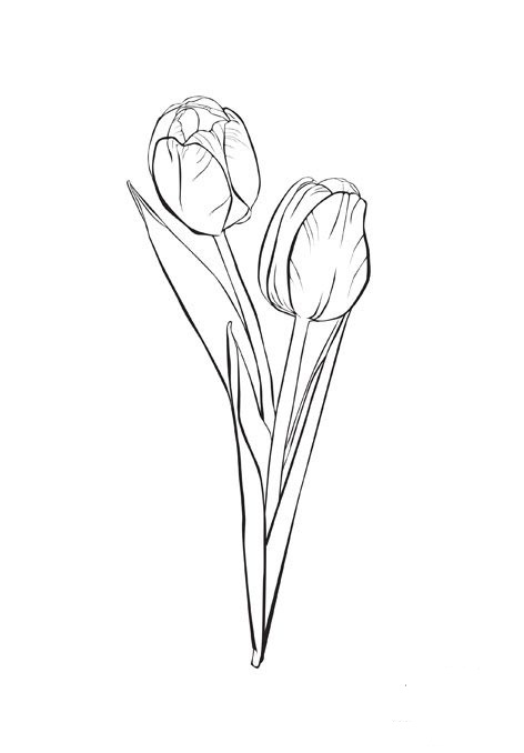 Tulip Coloring Page Child Coloring