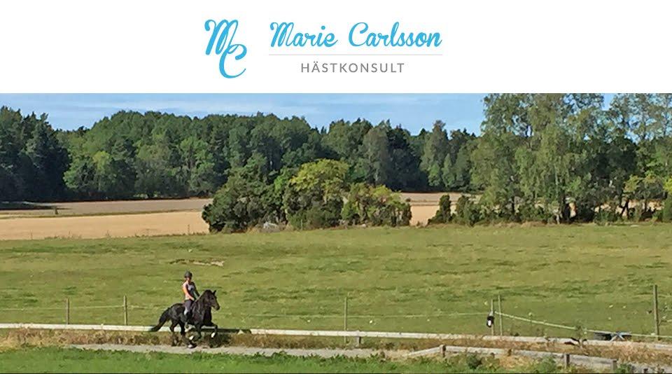 Marie Carlsson Hästkonsult